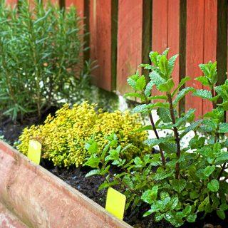 7 Reasons to Grow a Patio Herb Garden