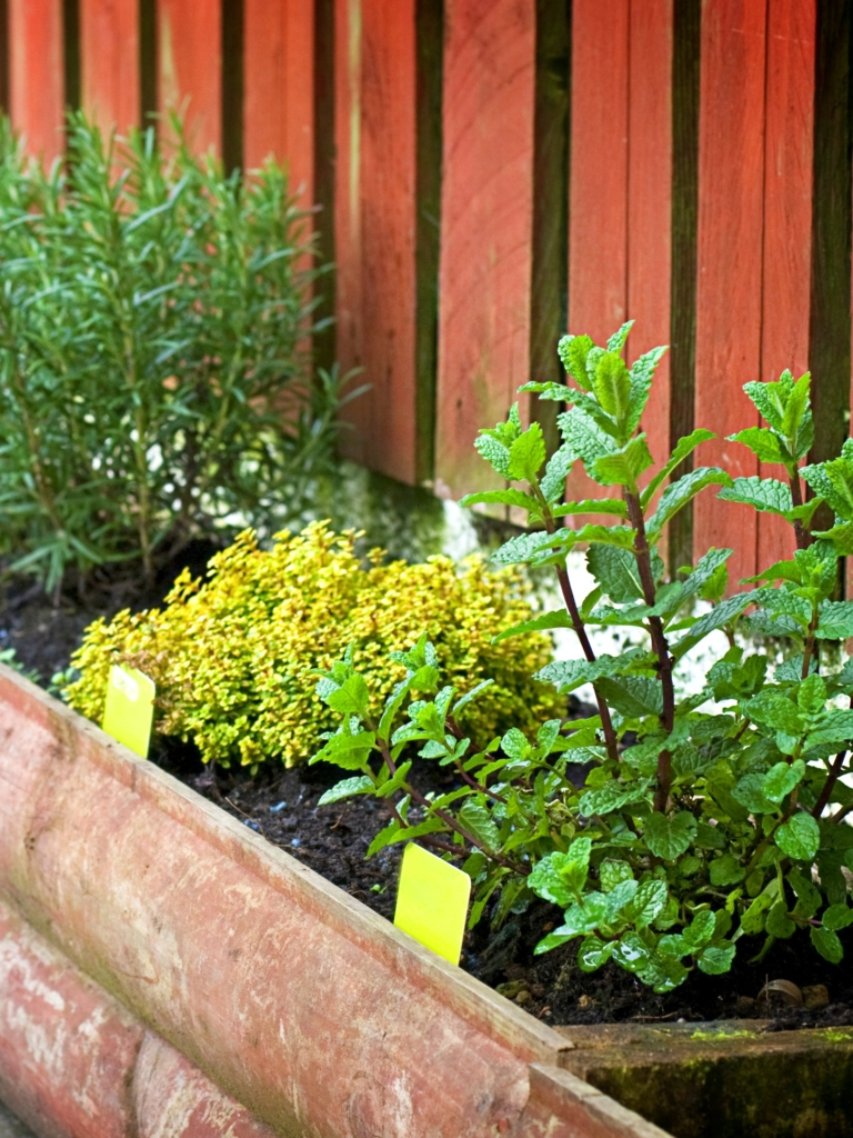 7 Reasons to Grow a Patio Herb Garden