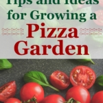Ideas and Tips for Growing a Pizza Garden