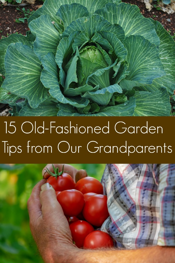 15 Old-Fashioned Garden Tips from Our Grandparents